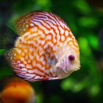 Moving day: How to move your fish?